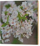 Cherry Blossoms 2013 - 068 Wood Print