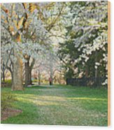 Cherry Blossoms 2013 - 075 Wood Print by Metro DC Photography