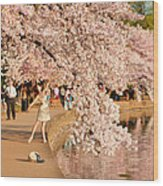 Cherry Blossoms 2013 - 076 Wood Print