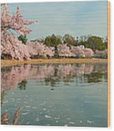 Cherry Blossoms 2013 - 083 Wood Print by Metro DC Photography