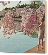 Cherry Blossoms 2013 - 085 Wood Print