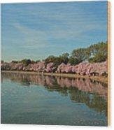 Cherry Blossoms 2013 - 087 Wood Print