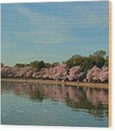 Cherry Blossoms 2013 - 088 Wood Print