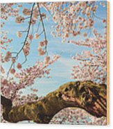 Cherry Blossoms 2013 - 089 Wood Print by Metro DC Photography