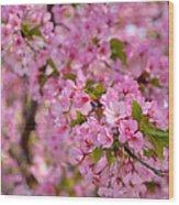 Cherry Blossoms 2013 - 096 Wood Print