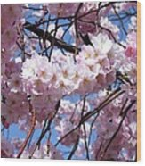Cherry Blossom Trees Of Branch Brook Park 3 Wood Print