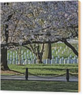 Cherry Blossoms Adorn Arlington National Cemetery Wood Print