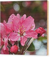 Cherry Blossoms And Greeting Card Blank Wood Print