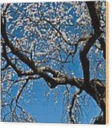 Cherry Blossoms And Sky Wood Print