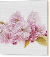 Cherry Blossoms Arrangement Wood Print