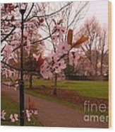 Cherry Blossoms At Kirkland In Kendal Wood Print