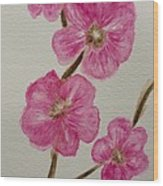 Cherry Blossoms Blooming  Wood Print