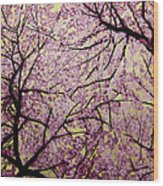Cherry Blossoms Wood Print by Bobby Zeik