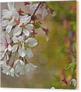 Cherry Blossoms Galore Wood Print