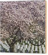 Cherry Blossoms Grace Arlington National Cemetery Wood Print