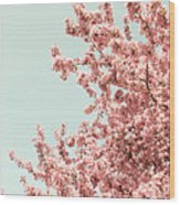 Cherry Blossoms In Spring Wood Print