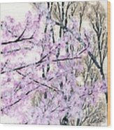 Cherry Blossoms In Spring Snow Wood Print