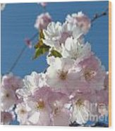 Cherry Blossoms In Spring Xi Wood Print