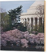 Cherry Blossoms Jefferson Memorial Wood Print