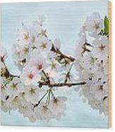 Cherry Blossoms No. 9146 Wood Print