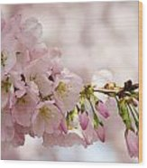 Cherry Blossoms No. 9164 Wood Print