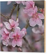 Cherry Blossoms Wood Print by Old Pueblo Photography