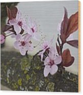 Cherry Blossoms On A Branch Wood Print