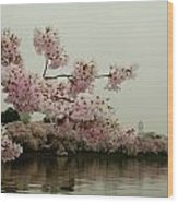 Cherry Blossoms On A Foggy Morning Wood Print