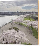 Cherry Blossoms Trees Along Willamette River Waterfront Wood Print
