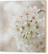 Cherry Blossoms - Washington Dc - 0113101 Wood Print
