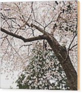 Cherry Blossoms - Washington Dc - 0113115 Wood Print by DC Photographer