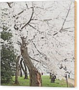 Cherry Blossoms - Washington Dc - 0113135 Wood Print