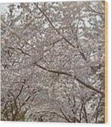 Cherry Blossoms - Washington Dc - 011363 Wood Print