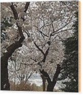 Cherry Blossoms - Washington Dc - 011373 Wood Print by DC Photographer