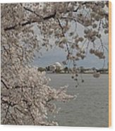Cherry Blossoms With Jefferson Memorial - Washington Dc - 011320 Wood Print by DC Photographer