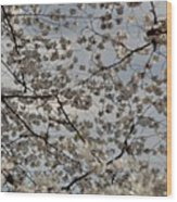 Cherry Blossoms With Jefferson Memorial - Washington Dc - 011330 Wood Print by DC Photographer