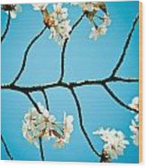 Cherry Blossoms With Sky Wood Print by Raimond Klavins