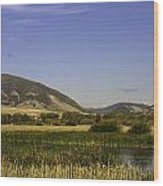 Cherry Creek Pond Cattails Wood Print