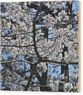 Cherry Lane Series  Picture B Wood Print