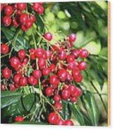 Cherry Laurel  Wood Print