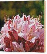 Cherry Mist Azalea Wood Print