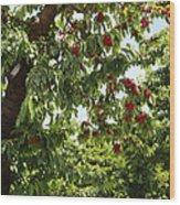 Cherry Orchard  Wood Print