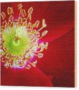Cherry Pie Rose 01a Wood Print