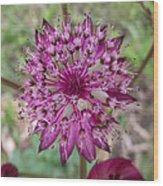 Cherry-queen Of The Prairie Flower Wood Print