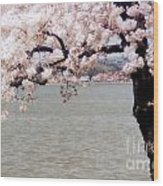Cherry Tree And The Potomac Wood Print