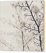 Cherry Tree Blossom Artistic Closeup Sepia Toned Wood Print