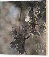 Cherry Tree Blossom Macro Wood Print
