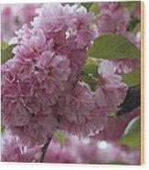 Cherry Tree Blossoms Wood Print