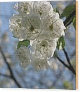 Cherry Tree Petals Wood Print