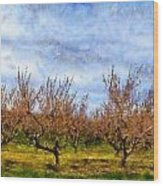 Cherry Trees With Blue Sky Wood Print